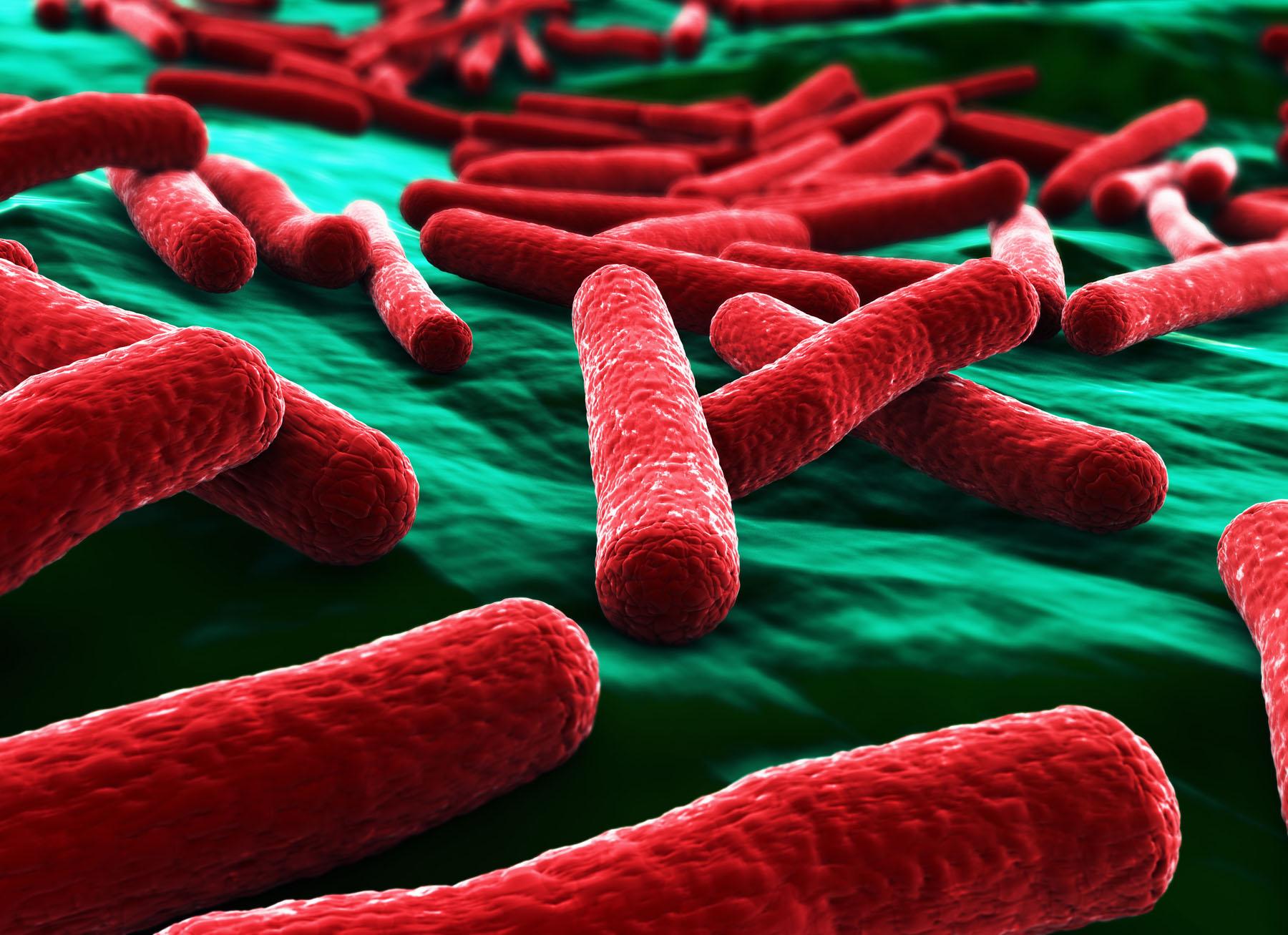 Mikroskopische Vergrößerung von E. coli-Bakterien in ihrer typischen Stäbchenform